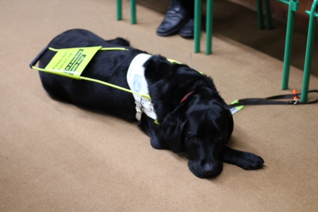 parap bowls development day - guide dog